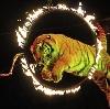 Цирки в Безенчуке