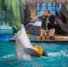 Дельфинарии, океанариумы в Безенчуке