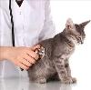 Ветеринарные клиники в Безенчуке